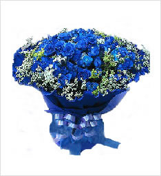 蓝色妖姬-蓝色之梦
